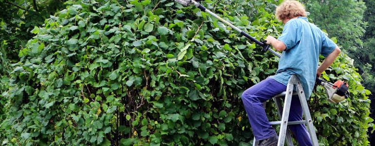 Man cutting hedge with one of the best long reach hedge trimmers on the market