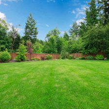 Here are 5 great organic lawn care tips