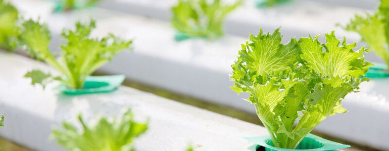 Featured image for a page of hydroponic garden tips.